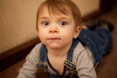 Beautiful baby boy crawling at home Royalty Free Stock Photo
