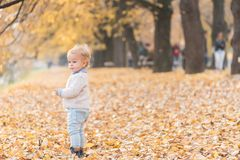 Beautiful baby boy posing at the park. Autumn season.  royalty free stock photography