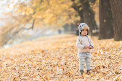 Beautiful baby boy posing at the park. Autumn season.  stock images