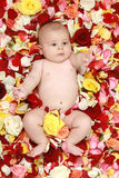 Beautiful baby boy in a rose plants. Little boy in rose-petals royalty free stock image