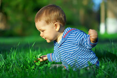 Beautiful baby boy sitting among green grass. On spring lawn Royalty Free Stock Photography