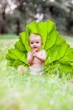 Beautiful baby boy sitting among green grass on Royalty Free Stock Photo