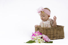 Beautiful baby girl in a basket. Cute baby in a flower dress sitting in a flower basket Royalty Free Stock Photography