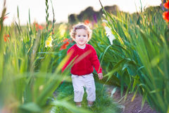 Beautiful baby girl in gladiolus field at sunset Royalty Free Stock Images
