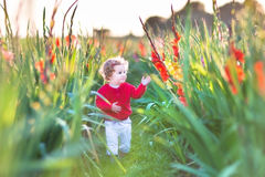 Beautiful baby girl in gladiolus field at sunset Stock Images