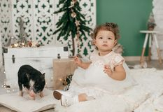 Beautiful baby girl near a Christmas tree with gifts with. Little boy feeding black vietnamese piglet. Concept of the Chinese New Year 2019 of the Pig stock photos
