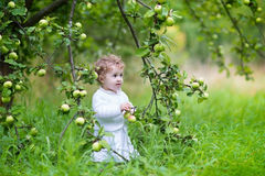 Beautiful baby girl walking in a garden picking ripe apples Stock Photography