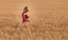 Beautiful baby girl with white hair in a wheat field in summer royalty free stock photo