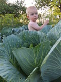 Beautiful baby in green cabbage leaves Stock Photo