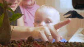 Beautiful baby looks at fish in an aquarium at home. My mother and grandmother sitting on a sofa and talking with his stock footage