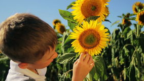 Beautiful baby smiling, sunflower in spring field stock video