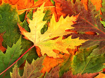 Beautiful backdrop of fallen autumn leaves Stock Image