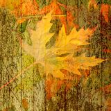 Beautiful backdrop of fallen autumn leaves Royalty Free Stock Photography