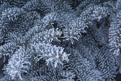 Free Beautiful Backdrop Of Snow-covered Tree Branches Stock Photos - 42176363