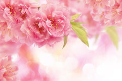 Beautiful background. Floral background in pink colors Royalty Free Stock Image