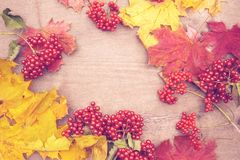 Beautiful background of autumn maple tree with yellow and red leaves and red viburnum berries. Not in focus. The horizontal frame Stock Photo