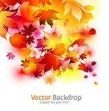 Beautiful background with autumnal leaves vector illustration