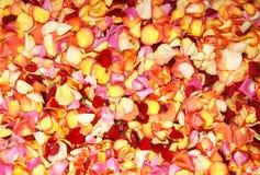 A beautiful background of bright fallen petals Stock Photos