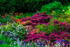 Beautiful background of bright garden flowers Royalty Free Stock Photography