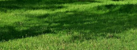 Beautiful background with bright green grass on the lawn stock photos