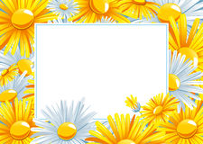 Beautiful background with a Chamomile.  vector illustration