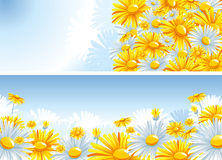 Beautiful background with a Chamomile.  Stock Photography