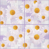 Beautiful background of Chamomiles. Seamless mosic square background with daisy flowers Stock Photography