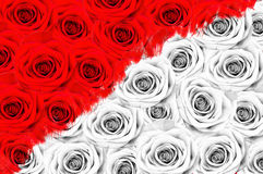 Many roses, half of the color, half of the black and white Stock Image