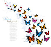Beautiful background with colorful butterfly. Stock Images