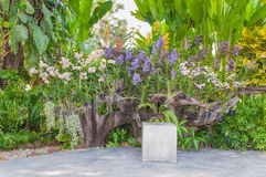 Beautiful background. Concrete bench in front of Many colors of orchid Royalty Free Stock Image