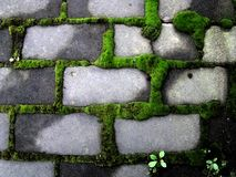Moss green accumulates around the grey bricks. Royalty Free Stock Images
