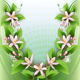Beautiful background with delicate flowers Royalty Free Stock Photos