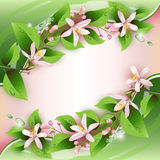 Beautiful background with delicate flowers Stock Photography