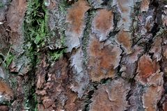 Beautiful background of different colors from the bark of a tree close up stock photos