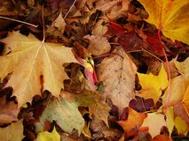 Beautiful background of fallen autumn leaves. royalty free stock photos