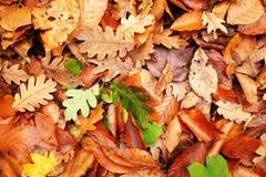 Beautiful background of fallen autumn leaves. Stock Photo
