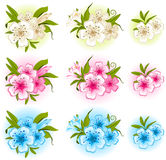Beautiful background with   flowers Stock Image