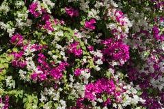 Beautiful background of flowers stock image