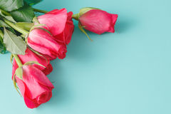 Beautiful background with flowers roses Royalty Free Stock Photos