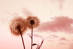 Beautiful background with flowers wallpaper Stock Images