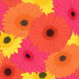 Beautiful background with gerbera flower . Stock Photo