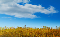Beautiful background with grass and sky. Autumn landscape on a sunny day. Beautiful background with grass and sky Stock Images