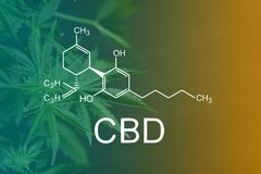 CBD Chemical Formula, CBD Chemical Formula, Beautiful background of green cannabis flowers A place for copy space royalty free stock image