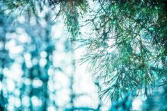 Branches of christmas treewith beautiful bokeh royalty free stock photo