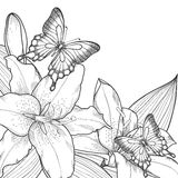 Beautiful background for greeting card with monochrome black and white lilies and butterflies Stock Photo