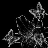 Beautiful background for greeting card with monochrome black and white lilies and butterflies. Stock Photos