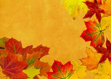 Beautiful background with leaves. It is with maple tree leaves stock images