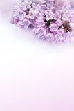 Beautiful, background with lilac flowers Royalty Free Stock Images