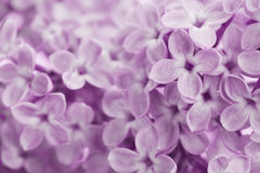 Beautiful background of lilac flowers, vintage floral texture Stock Photography
