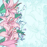 Beautiful  background with lilies Stock Photos